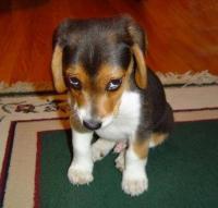 Cute Puppy Sez
