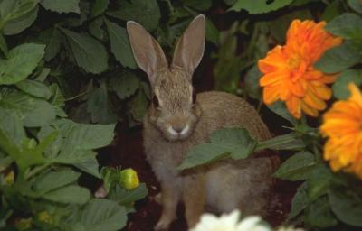 Homeschool Lessons from Nature: Bunnies Reproduce like Rabbits!