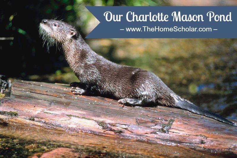 Our Charlotte Mason Pond